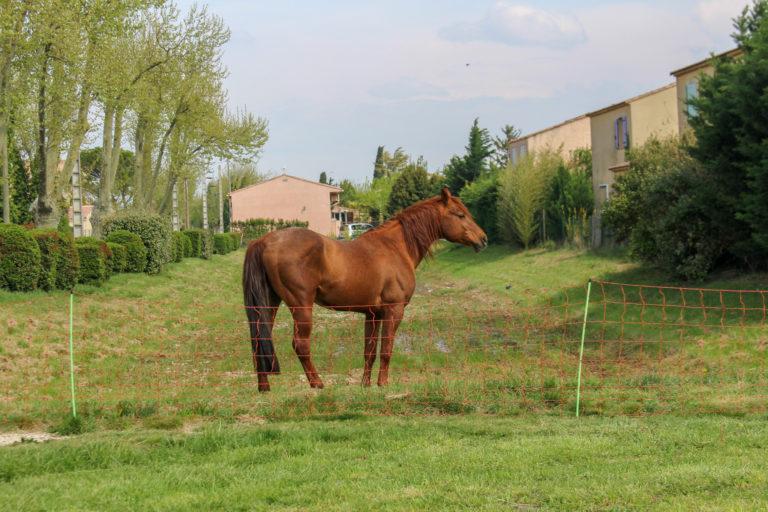 Des chevaux remplacent les épareuses à Entraigues