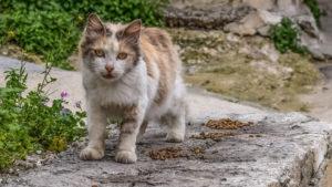 La commune va signer une convention pour la stérilisation des chats libres sur son territoire